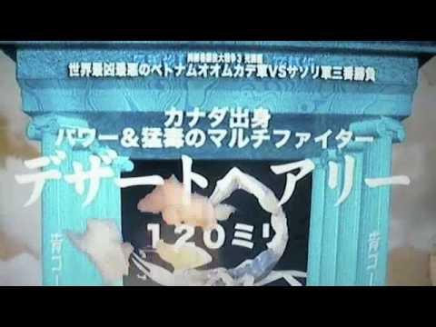 【世界最強虫対決!】 猛毒ムカデ vs 猛毒サソリ