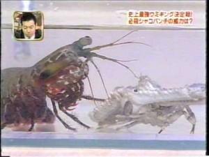 最強海キング決定戦!最強のシャコ、【モンハナシャコ】の壮絶バトル!!